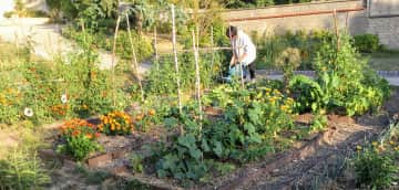 In my organic garden
