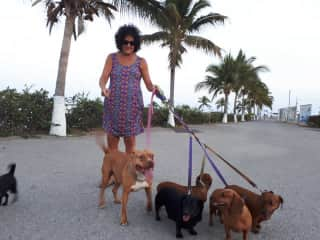Walking dogs in Mexico