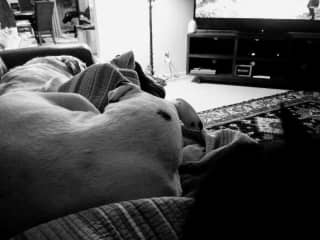 Movie Time - How many pets are piled on me? I'll give you a hint - More than 3, less than 5!