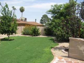 Backyard when newly landscaped