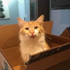 I love boxes