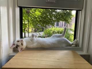 She loves sitting near the kitchen window