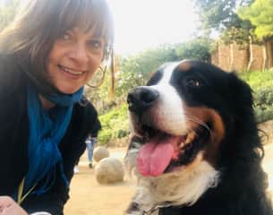 House and dog sitting in Barcelona (December 2018-January 2019)
