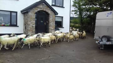 Farm sitting in Northern Ireland