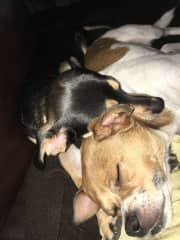 Our sweet grand dogs doing what they do best -- sleeping!