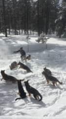 Playing w/ Pups