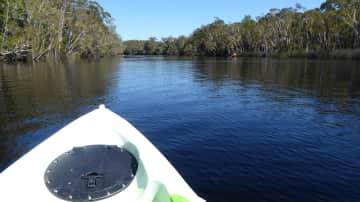 Kayaking in the Everglades Noosa