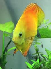 Three aquariums of fish