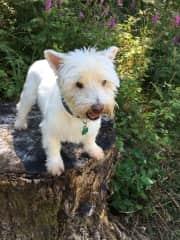 Duffy the wonder dog