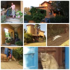 Vasanello, Lazio Italy - 2017 (June 10-30) - three lovely cats, a huge garden and five terraces with a lot of flowering plants