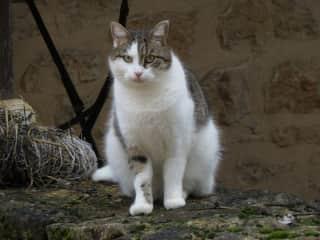 Cat Moses