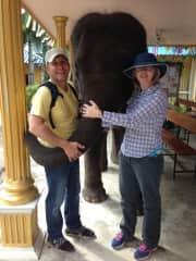 Elephant conservation farm Thailand