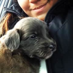 This is my baby Mocca when  we just rescued here. She currently lives in Guatemala with my mom.