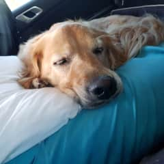 Sleepy squishy face