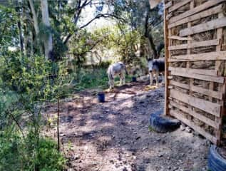Caring for Paco and Marisol the donkeys