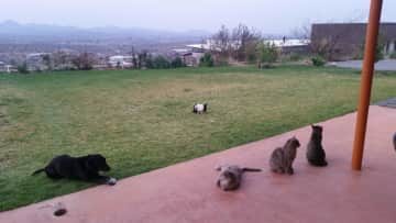 Our menagerie in 2015 - all getting along with each other and the rabbit...