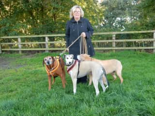 Linda with the 3 dogs in North Yorkshire 2015