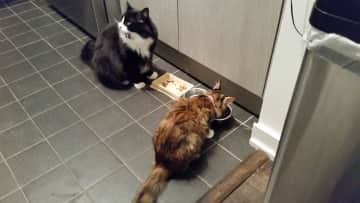 Penelope & Brian feeding time