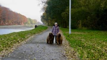 Carol in Belgium, 2 lovely Briards