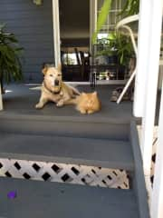 Marley and Butter on the porch