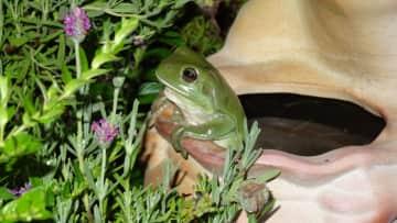 Nightly visitor to my garden