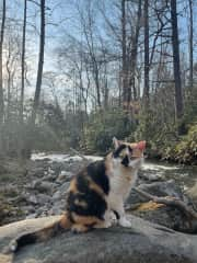 bella hanging at the creek right outside the house