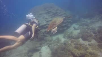 Diving is one of my favorite things to do when I travel