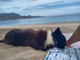Dog sit Karpathos island Greece 2020 / chillin with Salty on the beach