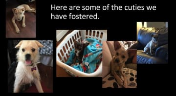 Here are a few of the dogs we have fostered