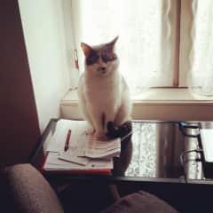 The Boss, Miss Puss.
