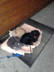 Bugsy, Tweety and Tucker.