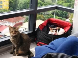Gully and Newt looking out at Bangkok