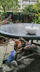 spending time with Joris, my landlords' cat (he wanted to sit on my lap, which was a great honour)