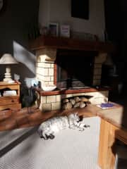 Tilly enjoying the sun by our log burner she likes to be warm