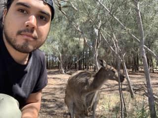 me with a kangaroo on Heirisson Island
