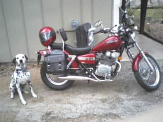 My beloved Dalmatian, Chai (RIP).  He will pose, but he will not ride!