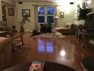 Dogs playing in the living room