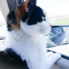 My passenger co-pilot, Zoe. She lives over the Rainbow Bridge now.