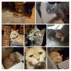 Harlem kitties