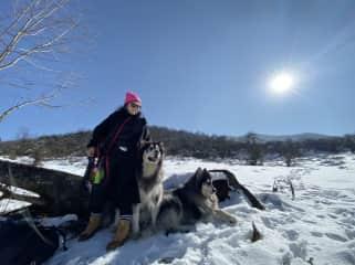 me and Alaskan Malamute Yaksha and Shura