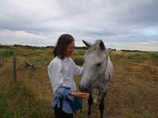 Curious horse during our bike trip