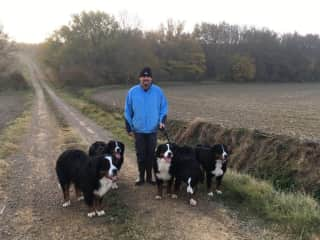 Simon's daily walks in the Pyrenees in France, 7 beautiful Bernese Mountain Dogs