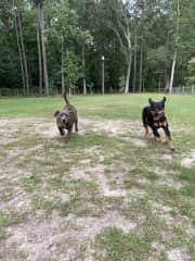 These girls love to run!