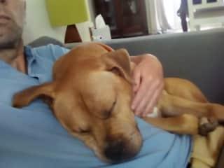 Looking after Duke (pet-sit)