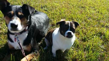Tinkerbell and Circus loved their fall frolicks and nature walks thru Mom and Dad's 10 acres in Blountville, TN.