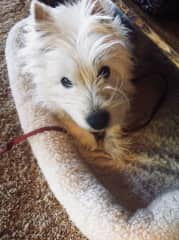 Willie our dog for only 9 years