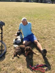 Dinky and Bumble, cavapoo and springer spaniel pet sit in Wandsworth - loved taking them in the Thames & long walks in Wimbledon Common. Super friendly dogs.