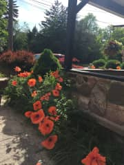 my beautiful poppies. I love to garden and will take good care of yours.