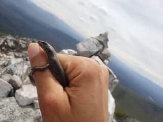 I am fond of reptiles