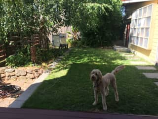 Bucky in the backyard